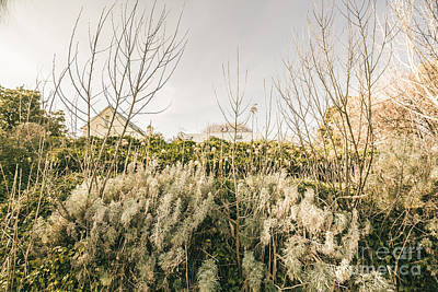 Messy Photograph - Overgrown English Garden by Jorgo Photography - Wall Art Gallery