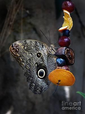 Owl Butterfly Print by Anita Faye