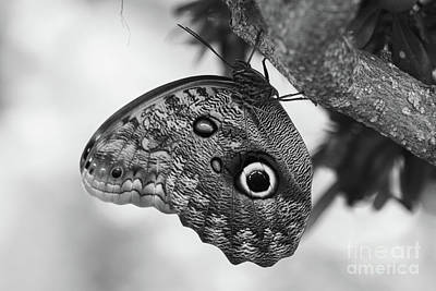 Photograph - Owl Butterfly Black And White by Patti Whitten