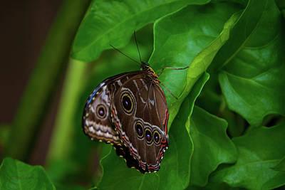 Owl Butterfly Print by Pamela Williams