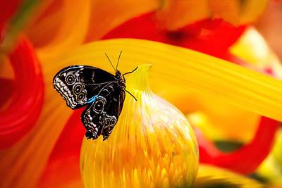 Monarch Photograph - Owl Eye Butterfly On Colorful Glass by Tom Mc Nemar