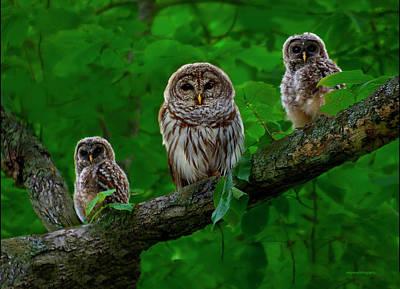 Owl Family Print by Ron Jones