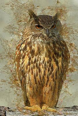 Owl Print by Jack Zulli