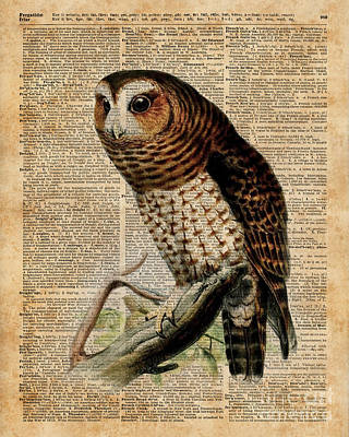 Owl Vintage Illustration Over Old Encyclopedia Page Print by Jacob Kuch