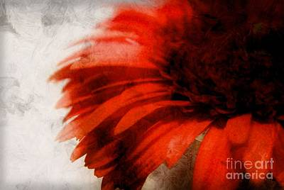 Gerbera Photograph - Paint by Clare Bevan