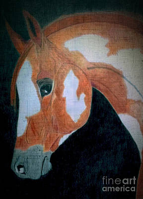 Pinto Drawing - Paint Horse Color Pencil by LKB Art and Photography