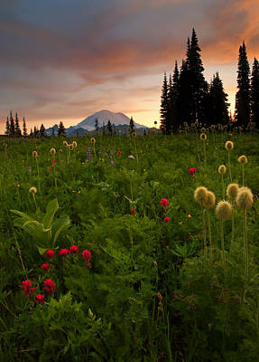 Mt. Rainier Photograph - Paintbrush Sunset by Mike  Dawson