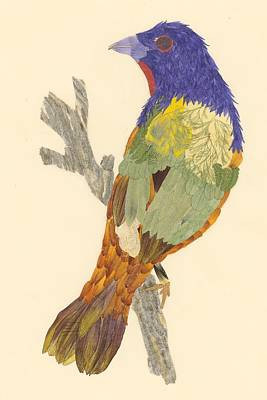 Bunting Mixed Media - Painted Bunting by Susanne Lorenzi