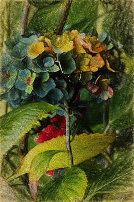 Painted Hydrangeas  Print by Bonnie Bruno