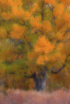 Double Exposure Photograph - Painted Tree by Darren White