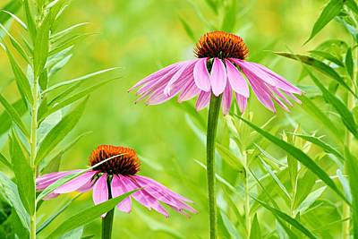 Orange Photograph - Pair Of Cone Flowers by Larry Ricker