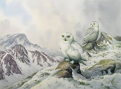 Snowy Mountains Painting - Pair Of Snowy Owls In The Snowy Mountains, Australia by Carl Donner