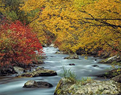 Cottonwood Photograph - Palisades Creek by Leland D Howard