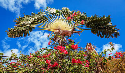 Trees Photograph - Palm And Flowers by Alexey Stiop