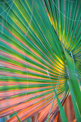 Palm Colors Print by Jan Amiss Photography