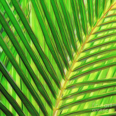 Interior Design Photograph - Palm Leaf by Scott Cameron