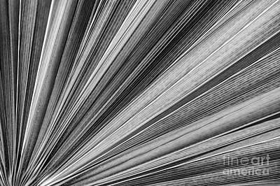 Radiates Photograph - Palm Leaf Texture by Elena Elisseeva