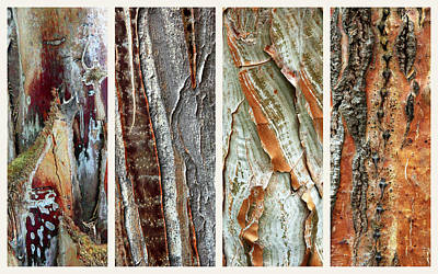 Tree Bark Photograph - Palm Tree Abstract by Jessica Jenney