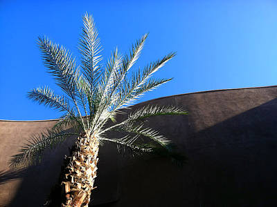 Palm Springs Convention Center Photograph - Palm Tree Drama by Stan  Magnan