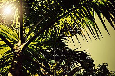 Sun Rays Digital Art - Palm Tree In Sunny Ocho Rios Jamaica by Patricia Awapara
