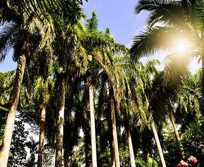 Jamaican Digital Art - Palm Trees Under The Jamaican Sun by Patricia Awapara