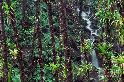 Palm Trunks And Waterfall El Yunque Print by Thomas R Fletcher