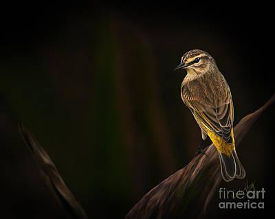 Warbler Digital Art - Palm Warbler by Linda King