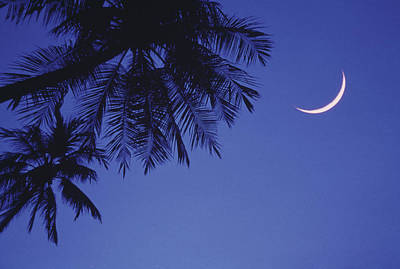 Palms And Crescent Moon Print by Anne Rippy