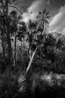 Palms And Palmettos Print by Marvin Spates