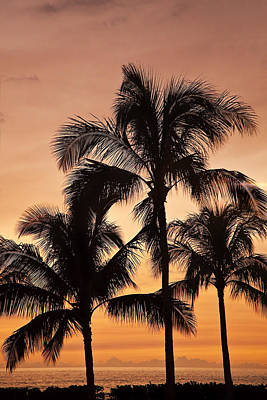 Outstanding Photograph - Palms At Sunset by Marcia Colelli