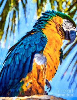 Panhandle Parrot Print by Mel Steinhauer