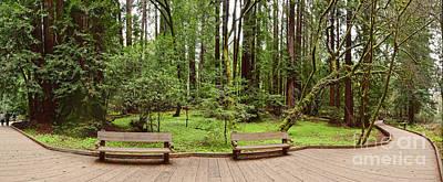 Panorama Of Muir Woods National Monument Boardwalk - Marin County California Print by Silvio Ligutti