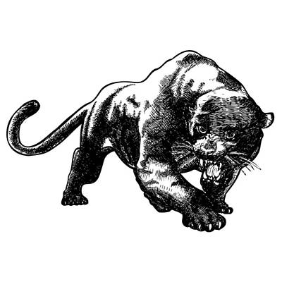 Panther Drawing - Panther by Karl Addison