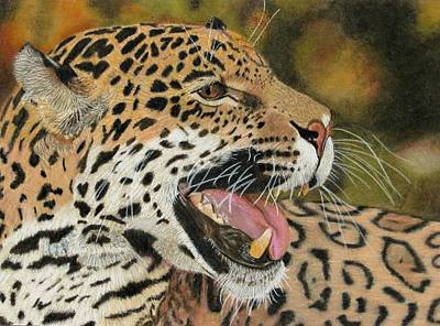 Panther Drawing - Panthera by Lori Hanks