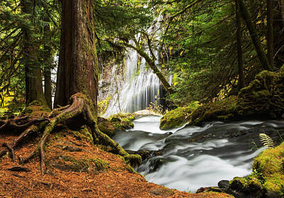 Fir Trees Photograph - Paradise At Panther Creek by Angie Vogel