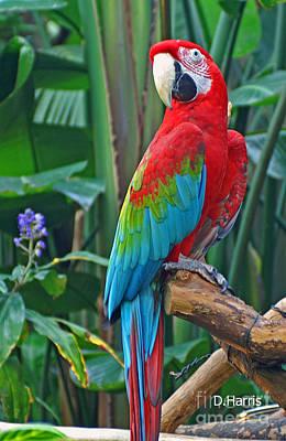Parrot Print by Dawn Harris