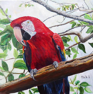 Parrot Portrait Print by Marilyn  McNish