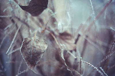 Fading Dream Photograph - Part Of Translucent Reality by Jenny Rainbow