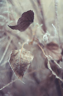 Fading Dream Photograph - Part Of Translucent Reality. Vertical by Jenny Rainbow