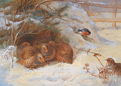 Finch Painting - Partridge And A Bullfinch In The Snow  by Archibald Thorburn