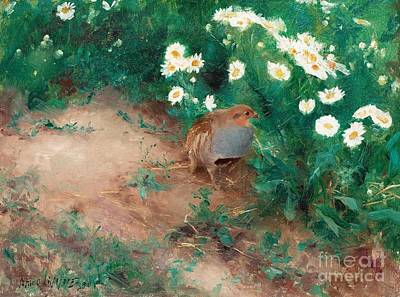 Partridge Painting - Partridge With Daisies by Celestial Images