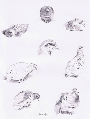 Partridges Print by Archibald Thorburn