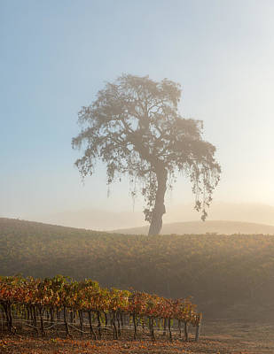 Winery Photograph - Paso Robles Morning by Joseph Smith