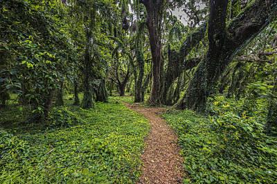 Horizontal Photograph - Pass Thru The Forest by Jon Glaser