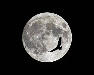 Luna Photograph - Passing By by Tony Beck