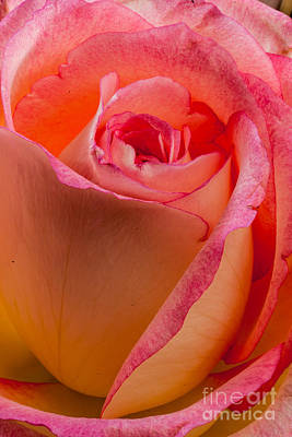 Photograph - Passionate by Greg Summers