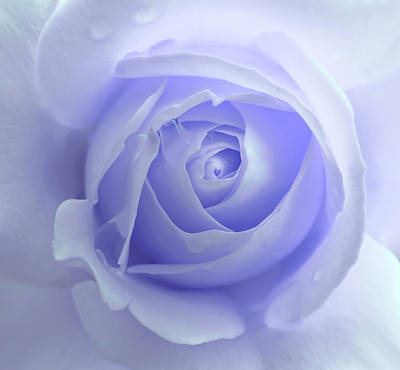 Rose Portrait Photograph - Pastel Purple Rose Flower by Jennie Marie Schell