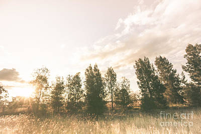 Autumn Scene Photograph - Pastel Sunset Forest by Jorgo Photography - Wall Art Gallery