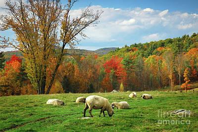 New Hampshire Autumn Photograph - Pasture - New England Fall Landscape Sheep by Jon Holiday