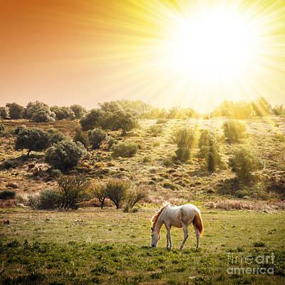 Beautiful Photograph - Pasturing Horse by Carlos Caetano